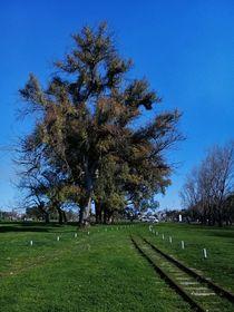 Parque verde by Ricardo De Luca