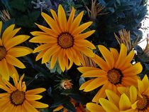 Flores de girasol by Ricardo De Luca