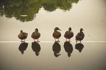 Fünf Enten von dresdner