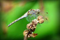 Libelle von maja-310