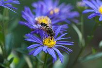 Biene beim Bestäuben von Thomas Sonntag