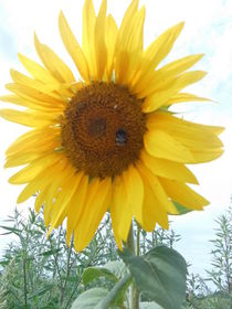 Sonnenstrahl by rosenlady