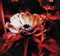 Blüte-6 von maja-310