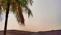 foggy day 1 by Talita Muniz