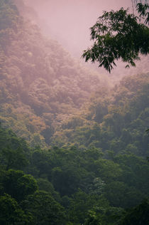 Tropical Forest by cinema4design