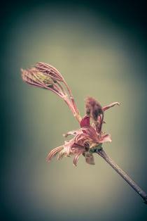 Die Blume von Frank Kemper