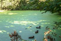Der grüne See by Nicole Bäcker