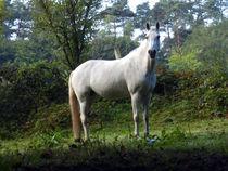 kein Junge auf dem weißen Pferd von Eike Holtzhauer