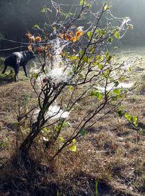 Das Geheimnis hinterm Spinnenbaum von Eike Holtzhauer