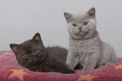 Dsc-3698-dot-bkh-kittens1-09-18
