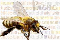 Biene - tanzende Arbeiterin by Astrid Ryzek
