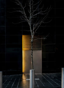 A Tree Grows in the City by James Aiken