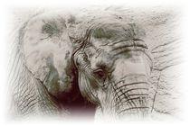 Elefant by maja-310