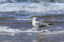 Möwe am Strand by AD DESIGN Photo + PhotoArt