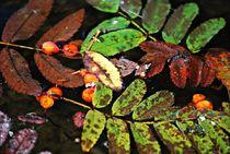 Herbststillleben... 2 von loewenherz-artwork