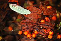 Herbststillleben... 1 von loewenherz-artwork