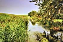 Hinterm Deich im Poldergebiet by garrulus-glandarius