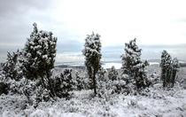 Wacholderheide im Schnee von Regina Raaf