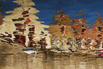 The Swan by Dragos Carbuneanu