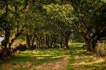 Woodland Edge von Colin Metcalf
