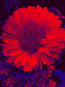 Blumen Poster Rotes Blumenbild von WelikeFlowers  von Robert H. Biedermann