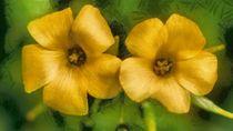 Yellow Flowers von Matthew Boggs