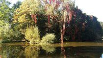 Herbst im Park by Rena Rady