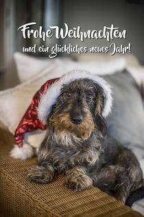 Weihnachtskarte mit Rauhaardackel von Susann Kuhr