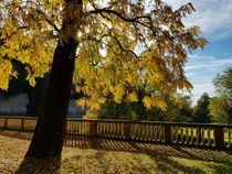 Herbst in Heidelberg  by farbfotografie