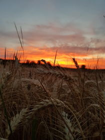 Sonnenuntergang im Feld  von farbfotografie