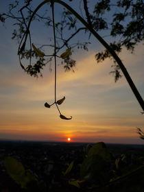 Blätter im Sonnenuntergang  von farbfotografie
