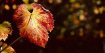 Herbstblatt von Ingrid Bienias