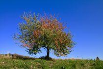 Herbstbild von Ingrid Bienias