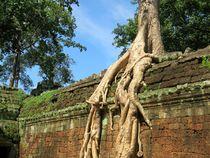 Königreich Kambodscha und Angkor Wat - Ta ProhmUnesco by Mellieha Zacharias