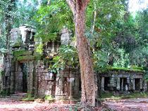 Königreich Kambodscha und Angkor Wat - Ta Prohm by Mellieha Zacharias