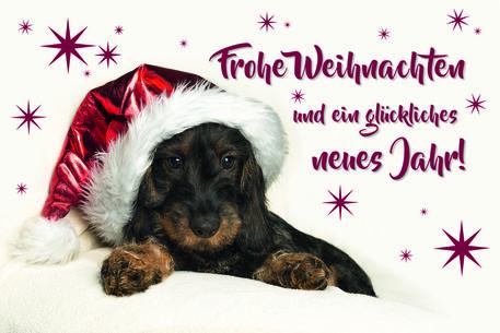 Sue1194-weihnachtsdackel-welpe-motte