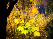 Lodernder Herbst von Regina Raaf