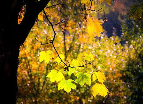 Herbstblatter