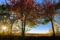Herbst von Ingrid Bienias