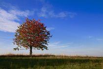 Herbstbaum von Ingrid Bienias