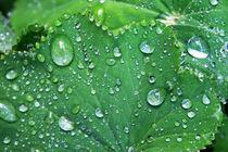 Raindrops ... by Heidrun Lutz