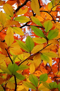 Herbstfarbenrausch von Regina Raaf