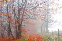 Herbstwald von Regina Raaf