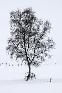 Baum im Schnee von Regina Raaf
