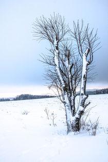 Baum 2 im Schnee von Regina Raaf