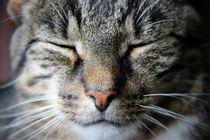 Katze von Regina Raaf