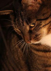 Katze 2 von Regina Raaf