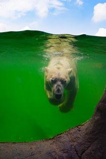 Eisbär unter Wasser von AD DESIGN Photo + PhotoArt