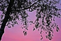 Herbsthimmel... 3 by loewenherz-artwork