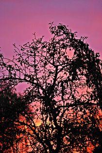 Herbsthimmel... 1 von loewenherz-artwork